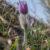 Jar v lesoch Tribeča