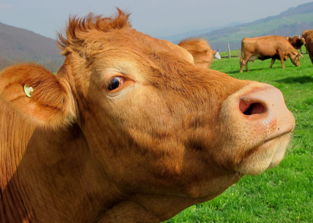 animal-close-up-countryside-63246