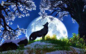kresleny-vlk,-mesiac,-zavyjanie,-stromy-238886