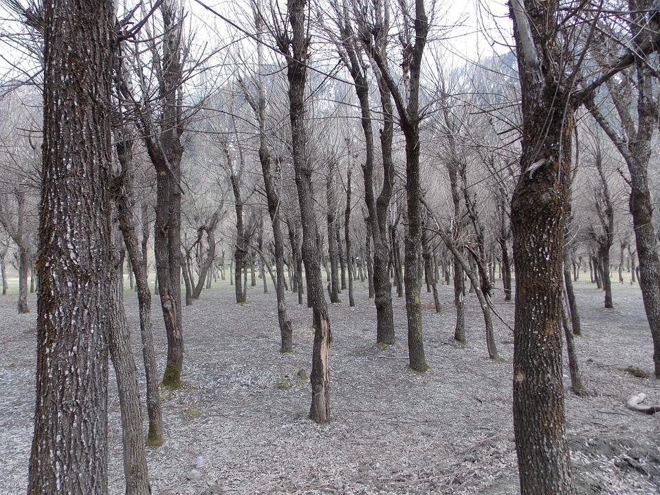 trees-984517_960_720